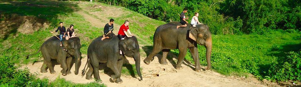 la passion des éléphants