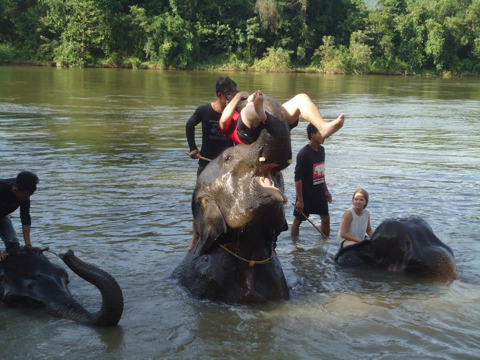 journée extraordinaire avec les éléphants