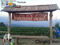Chiang mai ville 1